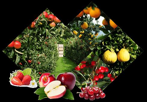 金泉果业种植基地