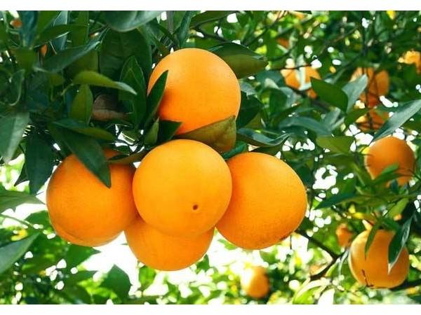 这些常见的秋季水果都有哪些营养价值呢?
