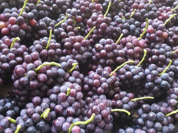 水果店从水果批发市场拿货还是从水果产地发货?哪个划算?