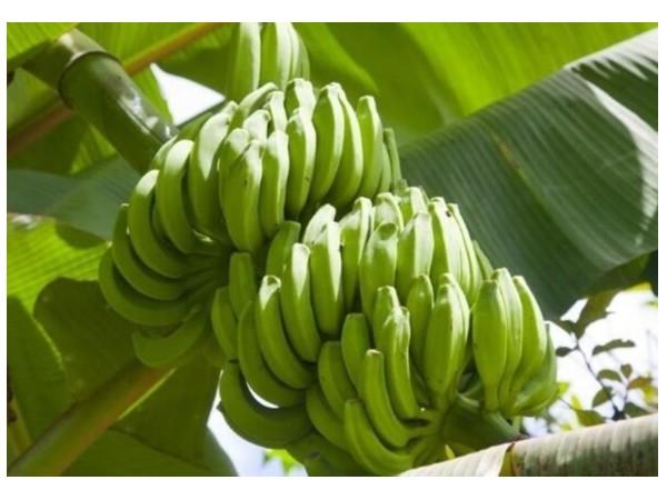 水果是怎么样进入水果批发市场的?