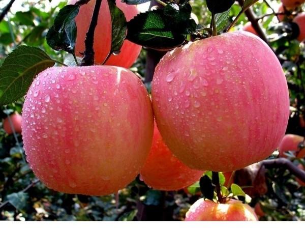 水果储存周期与储存方法大揭秘