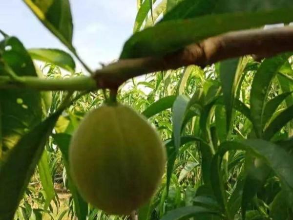 """高档水果量价齐涨无锡地产水果精品化""""突围"""""""