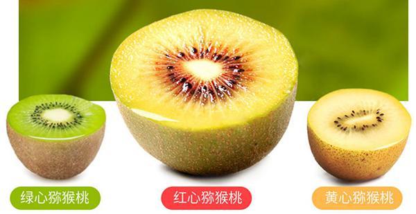猕猴桃种类